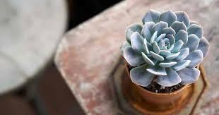 The best guide about growing succulent at home